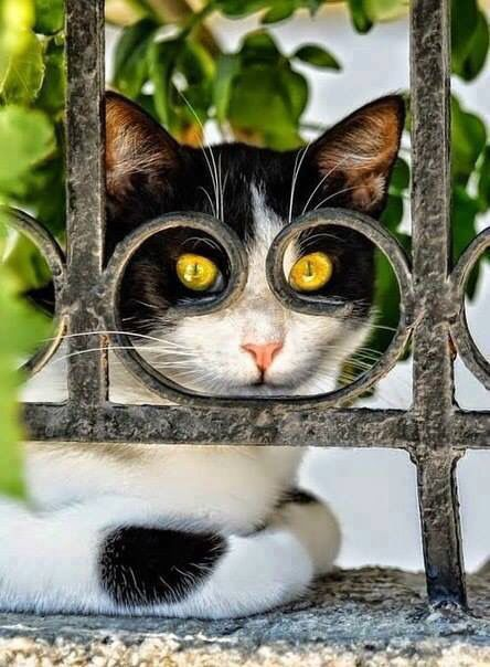 Pin by Donna Clous on Kitty Cuteness | Cats, Kittens cutest