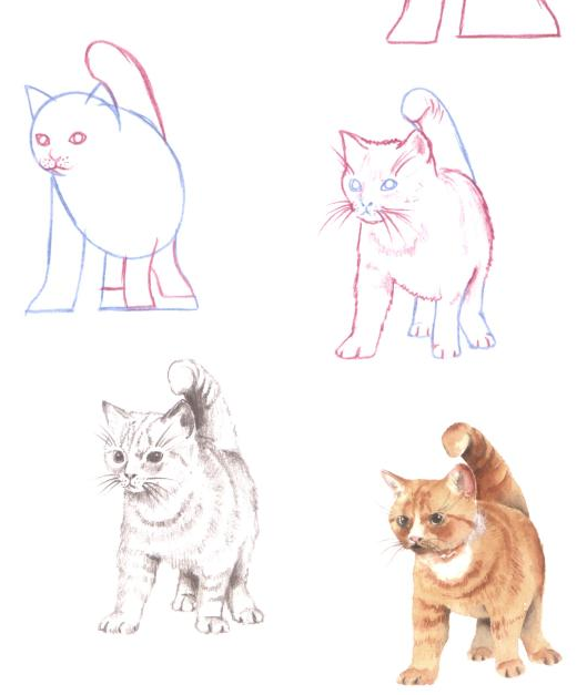 cf60eb82e100 How to Draw Cats in Simple Steps | 100th day projects? in 2019 | Cat ...