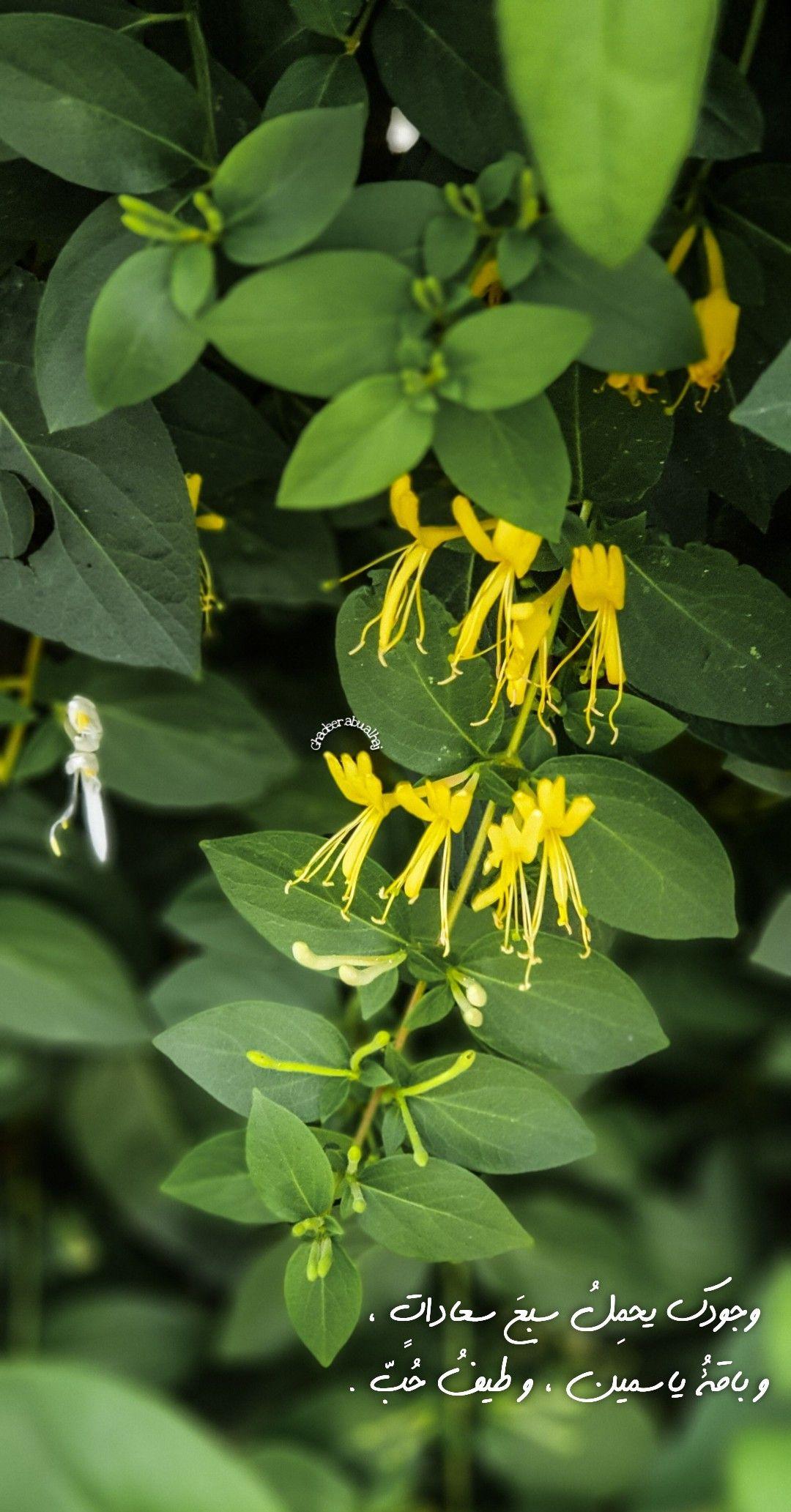 وجودك يحم ل سبع سعادات و باقة ياسمين و طيف ح ب Daisy Art Plant Leaves Flowers
