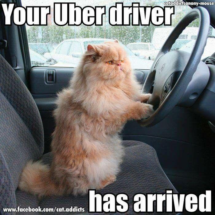 Pin By S T On Cat Memes Cats Cat Memes Funny Cat Memes