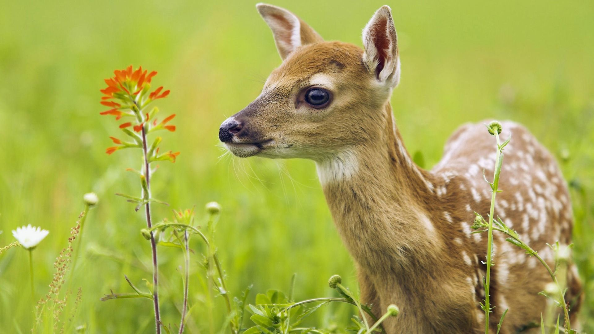 60 Beautiful And Cute Animal Wallpapers Animals Beautiful Nature Animals Animals Images