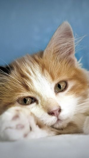 Pin By Frances Whittingham On Office Cat Or Not Pinterest