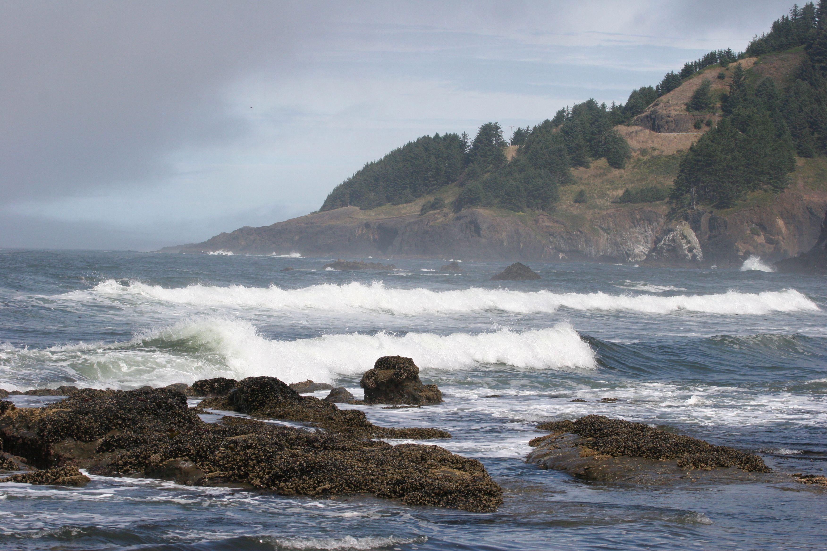 Oregon coast Otter Crest Area Otter