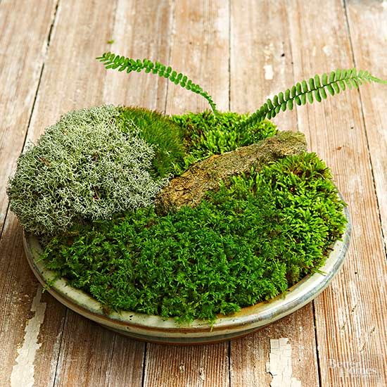 Five Simple Steps To Grow Moss In A Dish From Moss Expert David Spain.