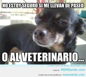 Memes Chistosos De Gatos Y Perros Memes Perros Perros Chistosos Memes De Perros Chistosos