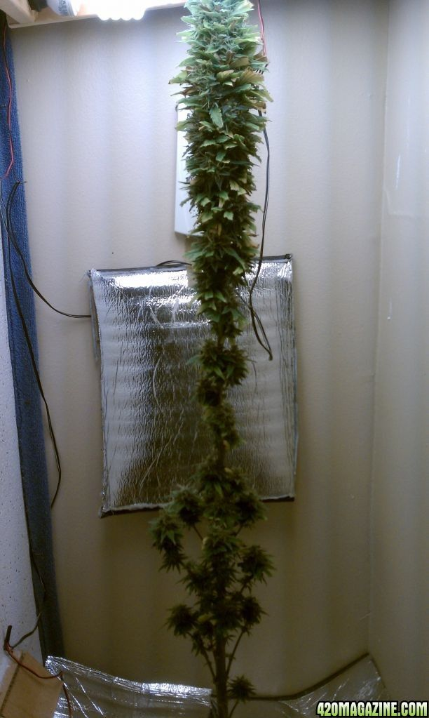 Pin on Medicinal Marijuana Highlight Board