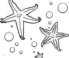 étoile De Mer Dessin Recherche Google Chambre Marine Coloriage