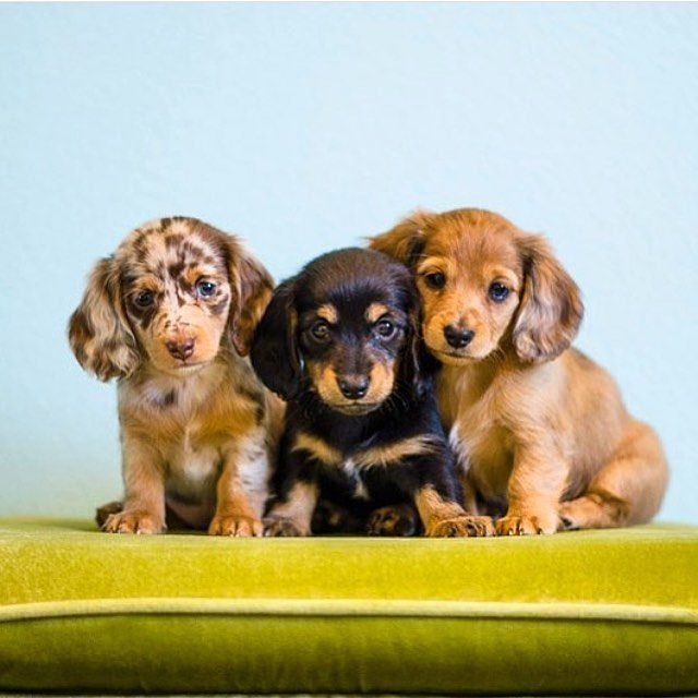 Dog Food Protein Is Essential To Your Dog Dogs Require More