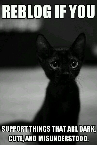 I Have A Black Kitten And I Love Him With All My Heart He So