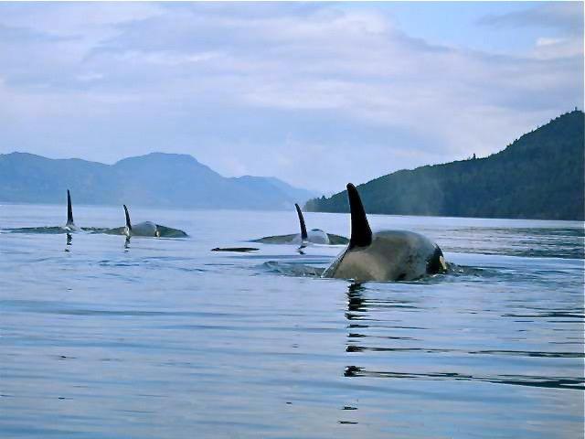 Naka Creek, Johnstone Strait, Vancouver Island, B.C ...