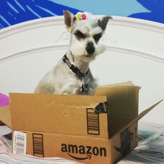 Amazon Prime Pet Superheroes Dogs Pets Dog Snacks