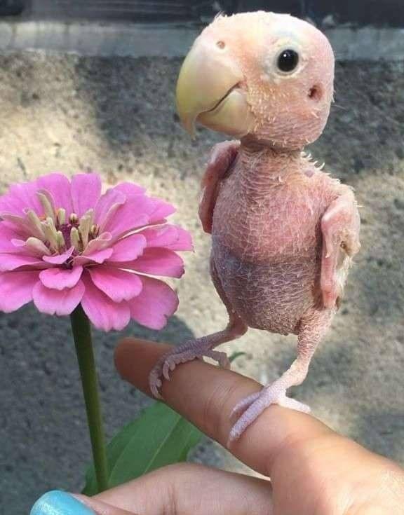 罹罕病的 無毛鸚鵡 另類萌 大家都想送毛衣給牠穿 鍵盤大檸檬 Ettoday東森新聞雲 ペットの鳥 かわいいペット ペット