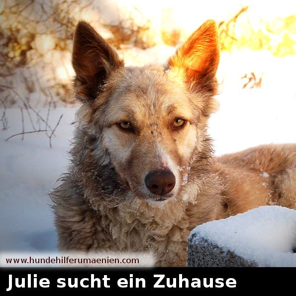 Julie adoptiert Hunde, Hunde vermittlung