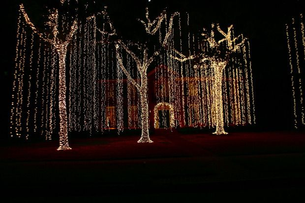 Charming Tastefully Executed Displays Of Christmas Lights Around Stately Homes @  River Oaks In Houston, TX