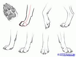 Image Result For Drawing Dog Paws Canine Drawings In 2019 Dog