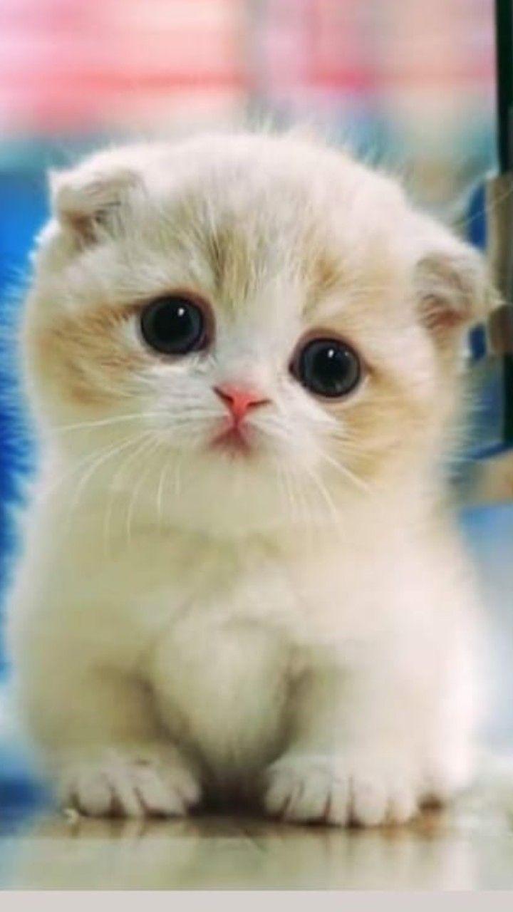 #cutekittens #kittens #catsandkittens kittens adorable | süßeste Kätzchen aller Zeiten c ...   - bébé chats     #adorable #ALLER #Bébé #catsandkittens #Chats #cutekittens #Kätzchen #kittens #süßeste #Zeiten #funnydogs #cutekittens #kittens #catsandkittens kittens adorable | süßeste Kätzchen aller Zeiten c ...   - bébé chats     #adorable #ALLER #Bébé #catsandkittens #Chats #cutekittens #Kätzchen #kittens #süßeste #Zeiten