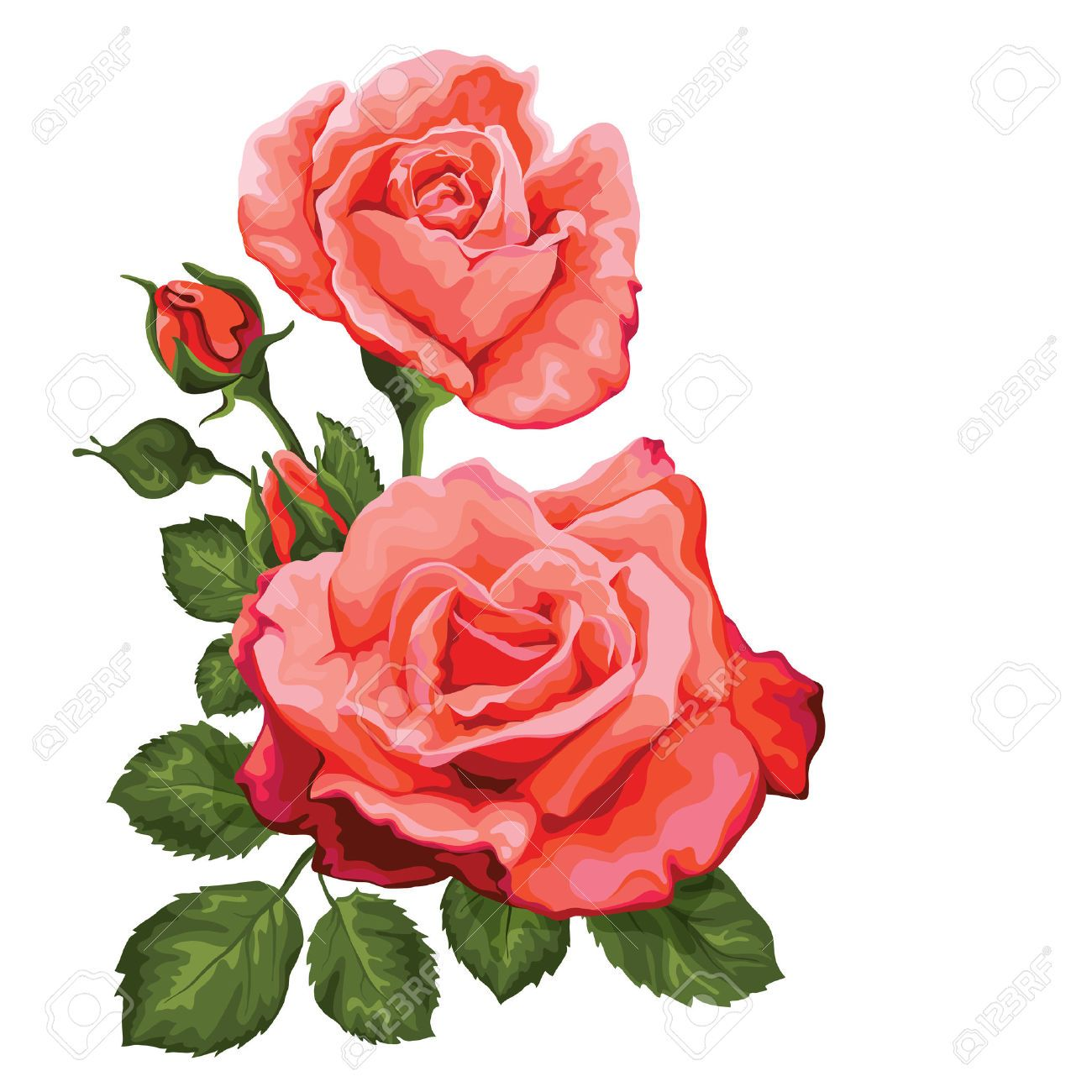 pink vintage roses vector illustration rose vektoren download symbol vektor