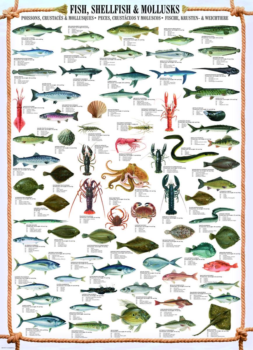 Eurographics fish shellfish mollusks 1000 piece puzzle for Fish in spanish