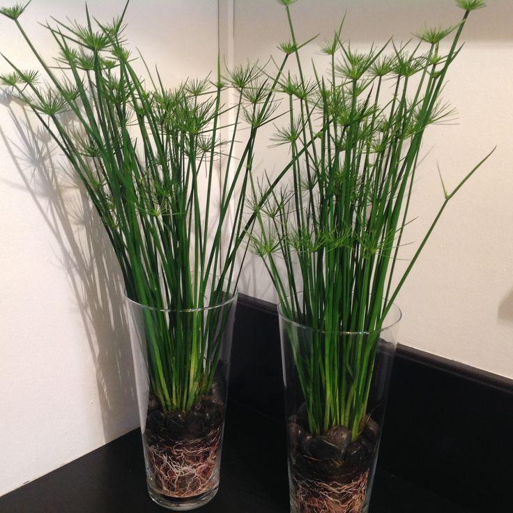 Extrêmement Plantes en pot d'intérieur : tentez l'originalité avec Fleurodet  VF96