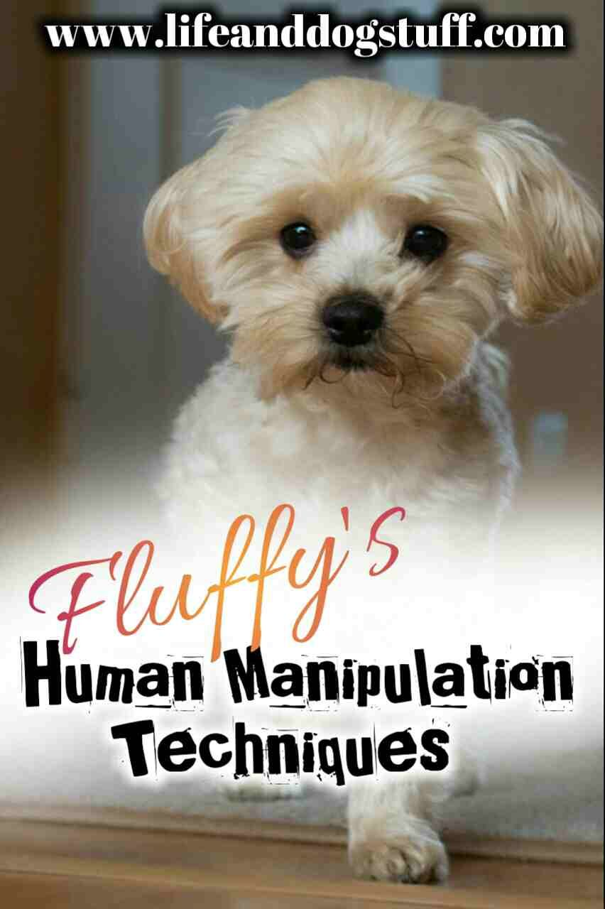 Fluffy's Human Manipulation Techniques   Posts   Funny dogs, Fluffy