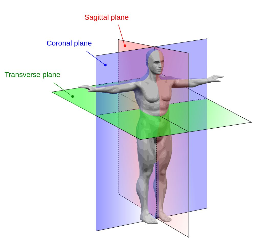 The language of anatomy is called the mid saggital plane, coronal ...