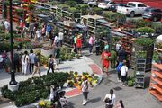 DETROIT, MI-- Thousands attended Sunday's the at the historic Eastern Market in Detroit.  We were in the crowd again this year.  The weather held for my daughter, her husband, son, daughter, my youngest son, and myself.  We had lunch at Gold Cash Gold after we finished getting our plants.