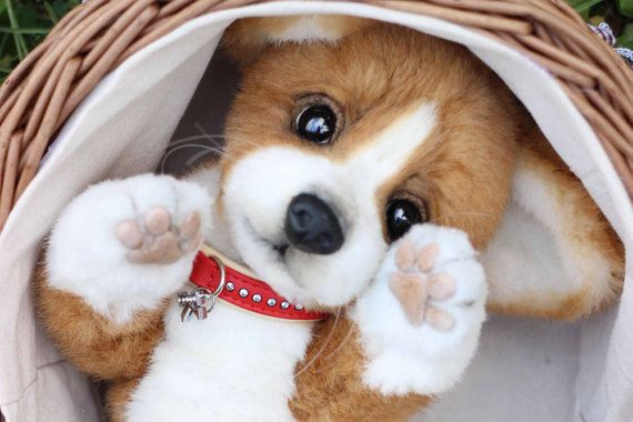 0b525a51a7cf Realistic puppy Welsh Corgi Pembroke Kelly OOAK handmade plush dog  collectible Artist toy teddy dog