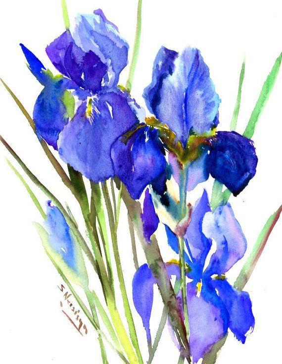 Blue Purple Irises Painting Original Watercolor 12 X 15 In
