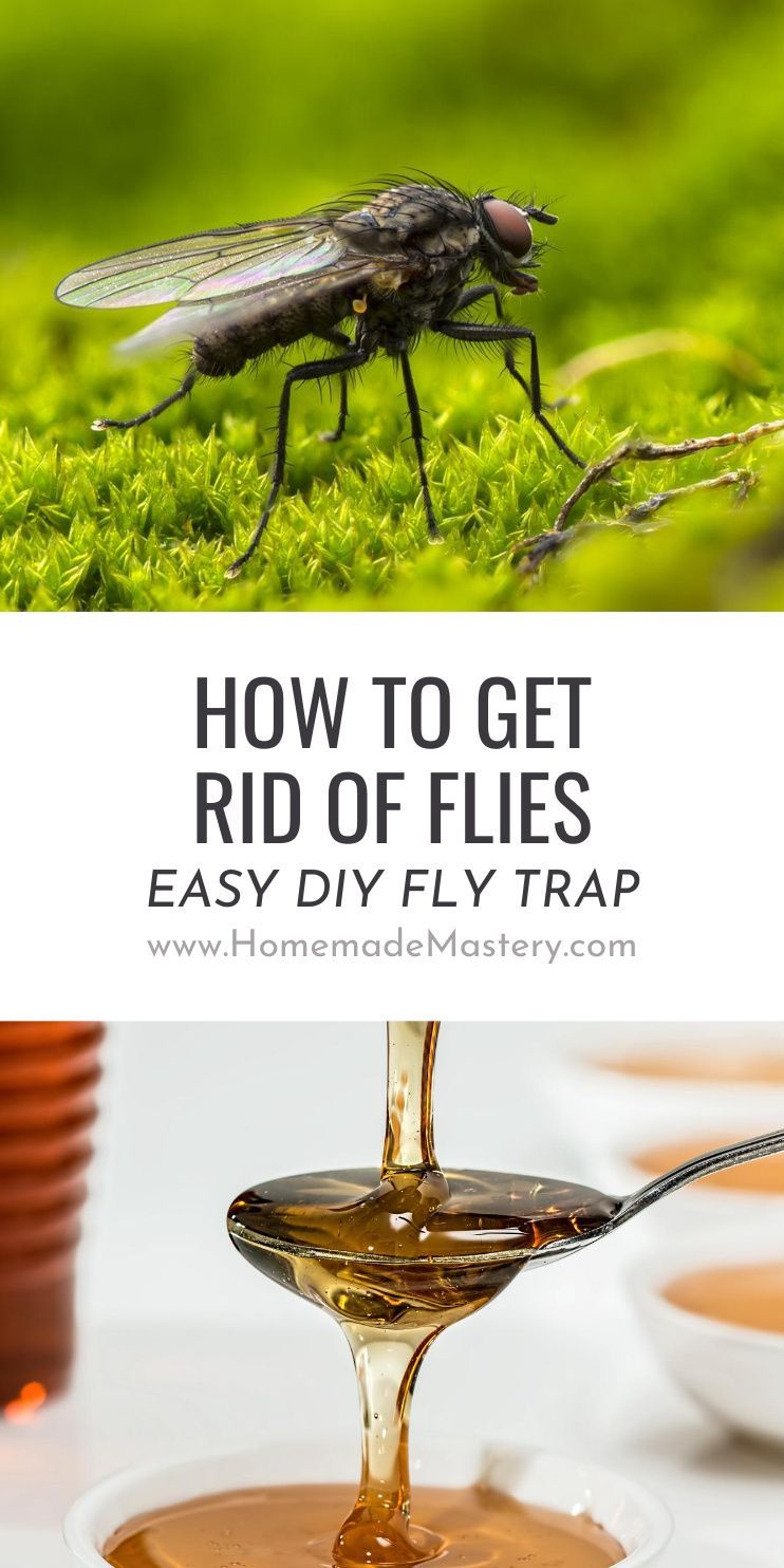 How to get rid of flies diy fly trap homemade mastery