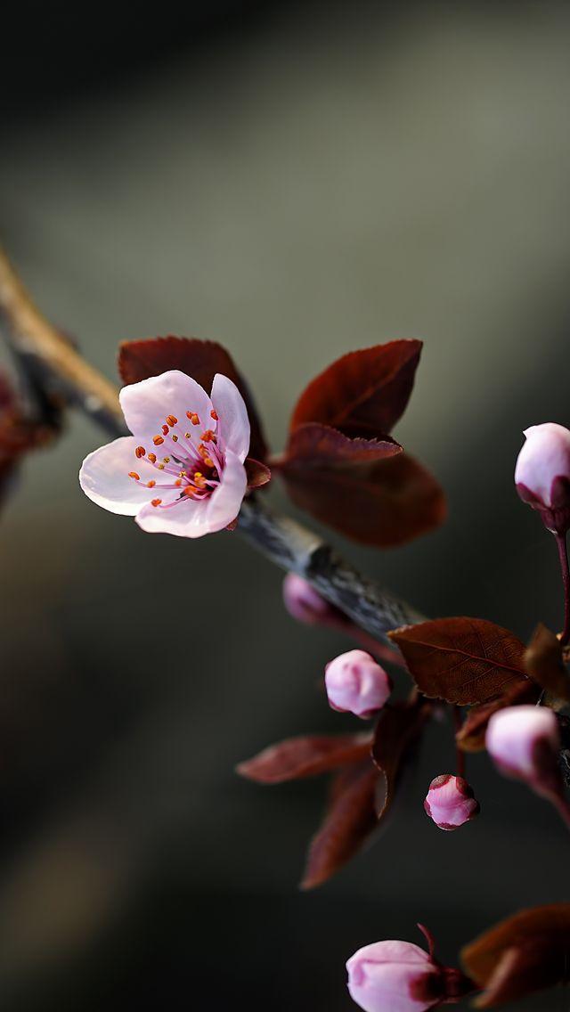 Purple Spring Spring Flowers Wallpaper Purple Spring Flowers Ipad Air Wallpaper Flower wallpaper for ipad air