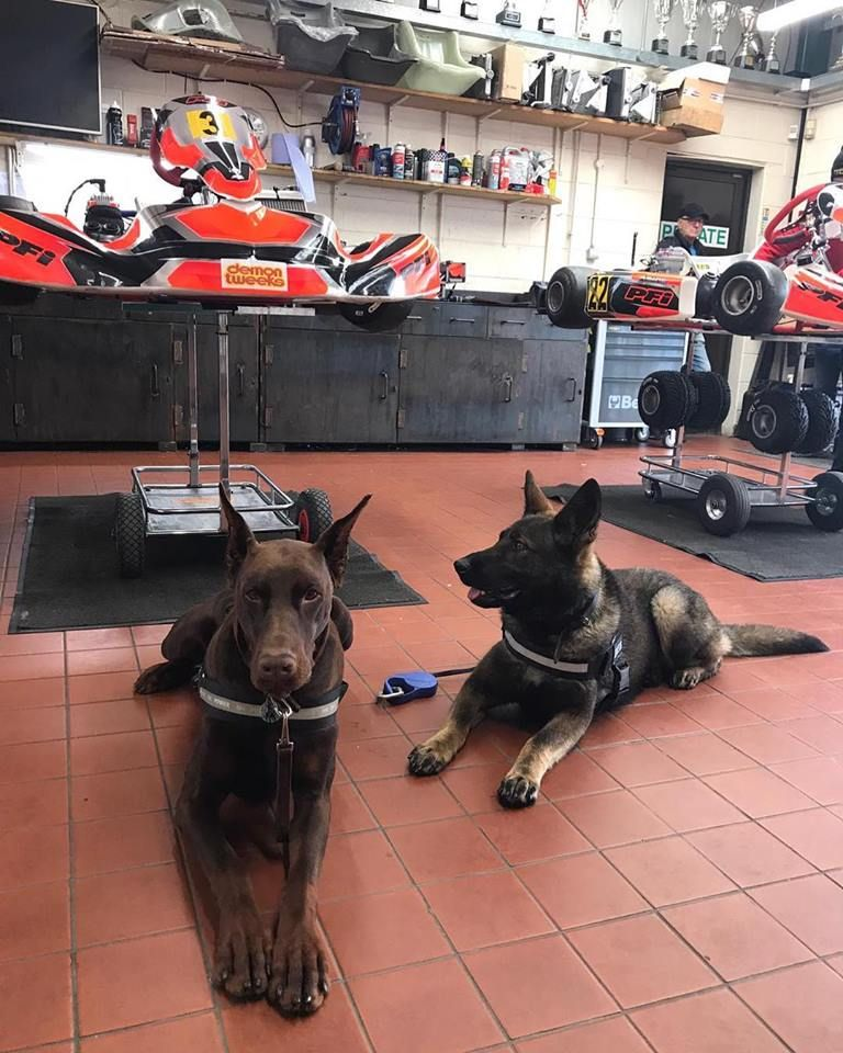 Costa Ria Go Karting Yesterday Www Protectiondogs Co