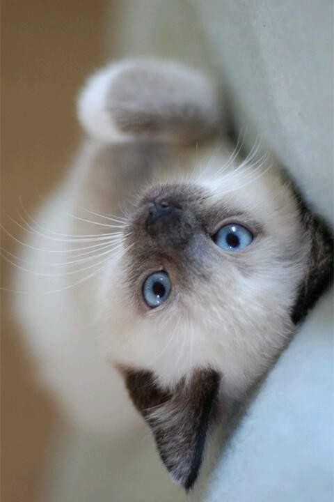 Pin By Tori Bruno On Animais Fofos Cute Cats Beautiful Cats Calming Cat