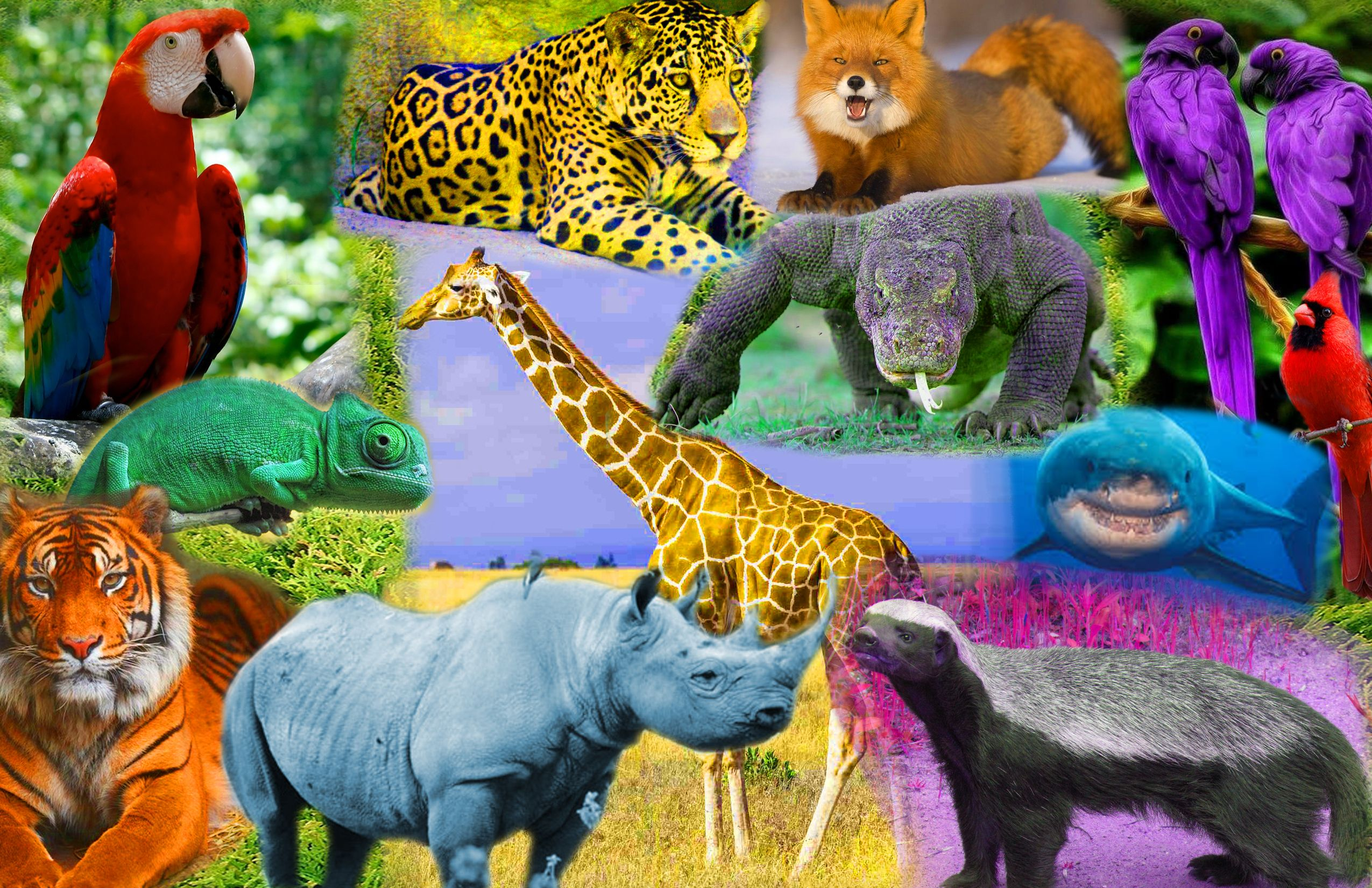 A Collage Of Different Animals With The Different Primary And Secondary Colors Primary And Secondary Colors Animals Dinosaur Stuffed Animal