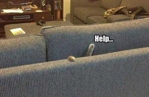 Sofa Cat Help Fail Awww Animals Funny Animals Funny Animal
