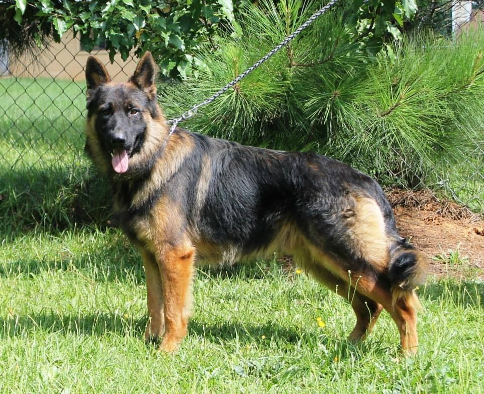 Our Main Man K9ga Lines Pridelands Prince Is Kovu This Was Taken