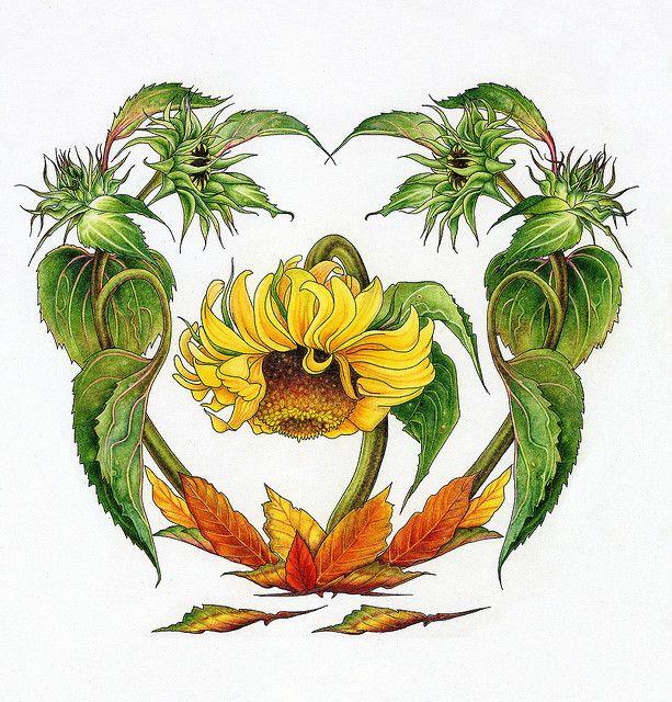 Sunflower July Flower Of The Month Flower Art July Flowers Birth Month Flowers