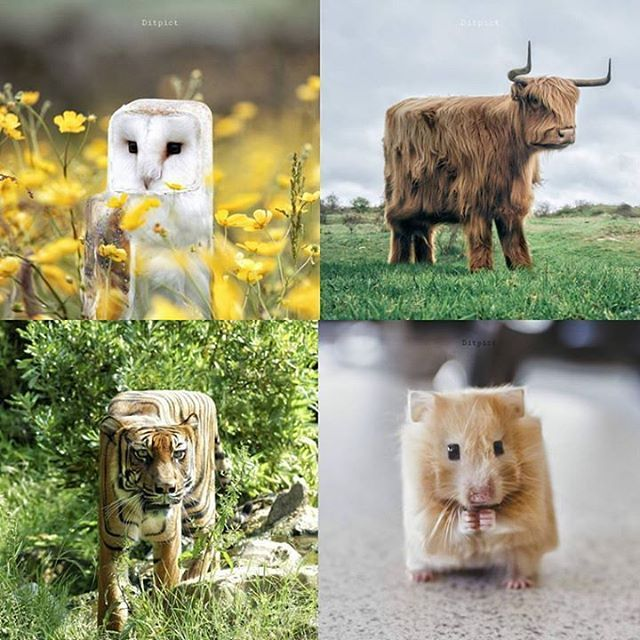 When you change the shapes of animals into cubes Follow @9gag @9gagmobile #9gag (cr: @ditpict) #digitalart #minecraft