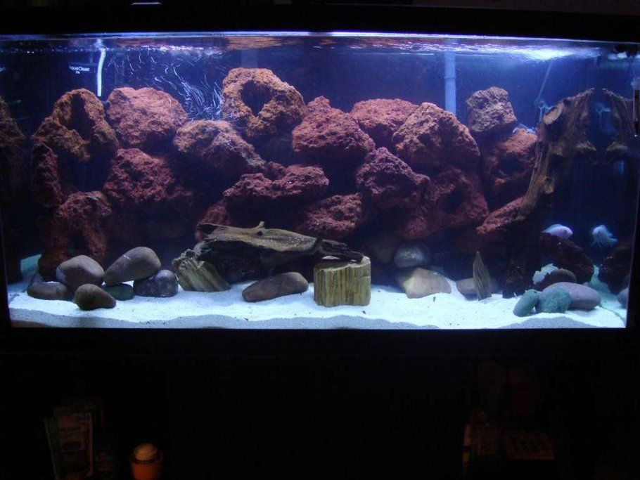 lava rock aquarium pinterest aquariums