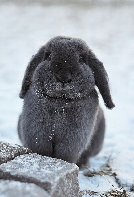 just a bunny cheeks