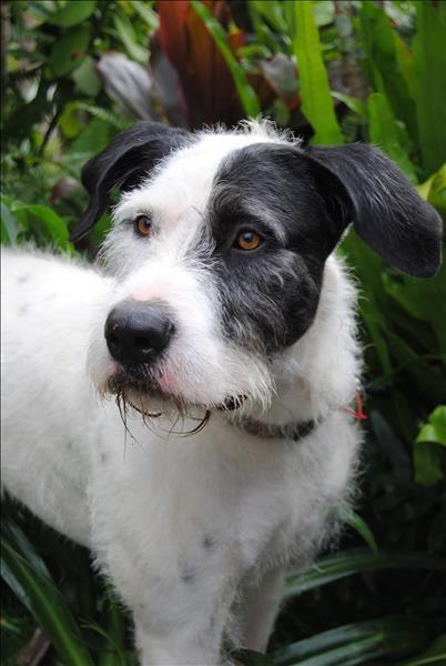 I Found This Pet On Www Adoptapet Com Au Unique Dog Breeds Hybrid Dogs Rare Dog Breeds