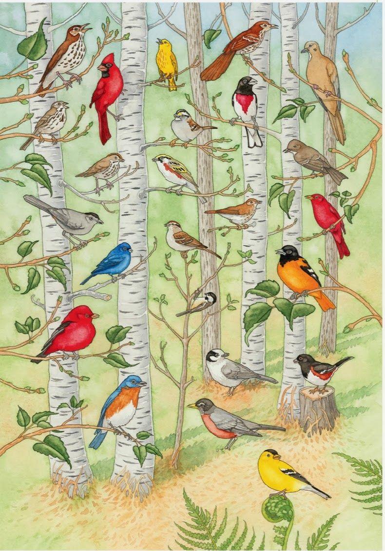 Discover Birds Minnesota Birds Wild Birds Unlimited Bird Poster