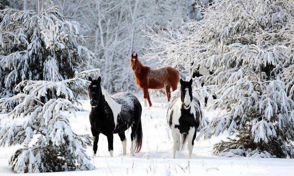 Mackinac Island Horses roaming free how wonderful.