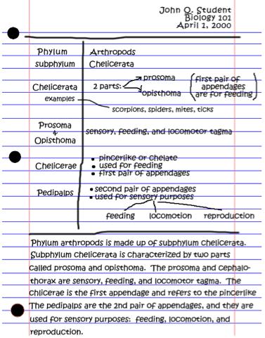 Cornell Notes Example Of Writing Summaries Third Grader Ell
