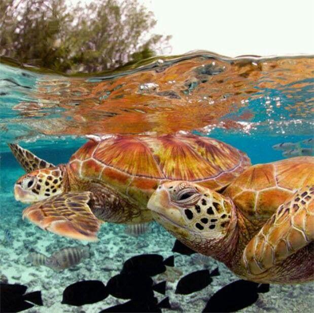Nuotare con le tartarughe è stupendo