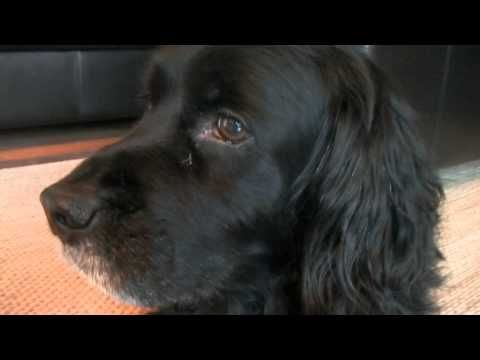 This is a video of Bonnie's dog Ashton, BEFORE she and