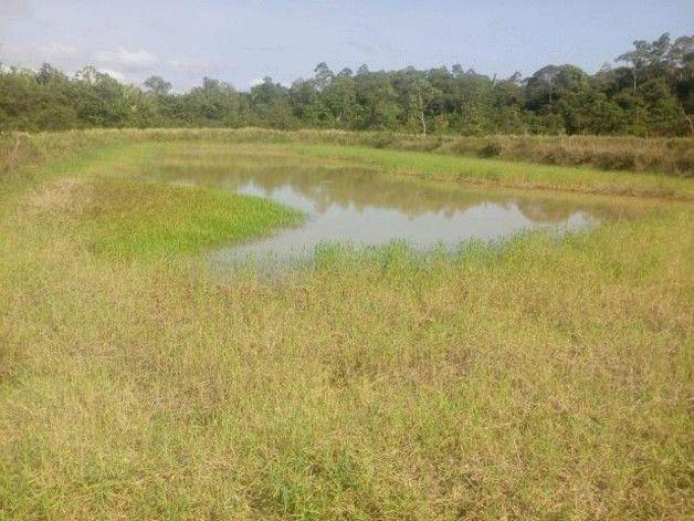 ⛱ Brasilien 1000 Ha Grundstück in der Nähe von Manaus Amazonas Brasilien