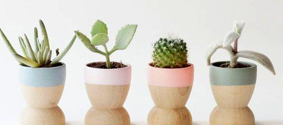 Souvenirs  para los invitados a la boda, plantas para la boda