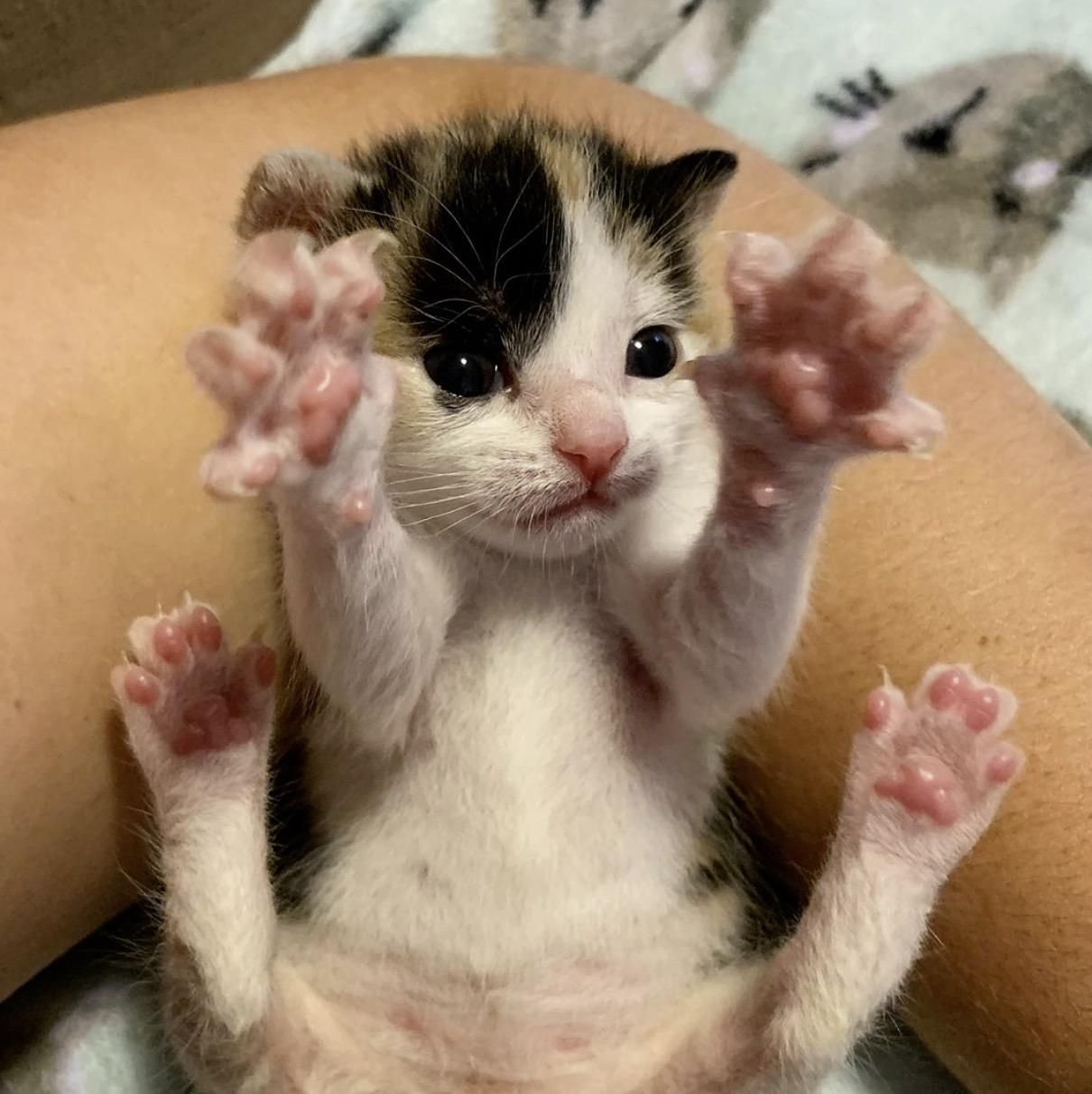 Those Little Jelly Beans Source In Comments Cat Pet In 2020 Foster Kittens Kittens Cats