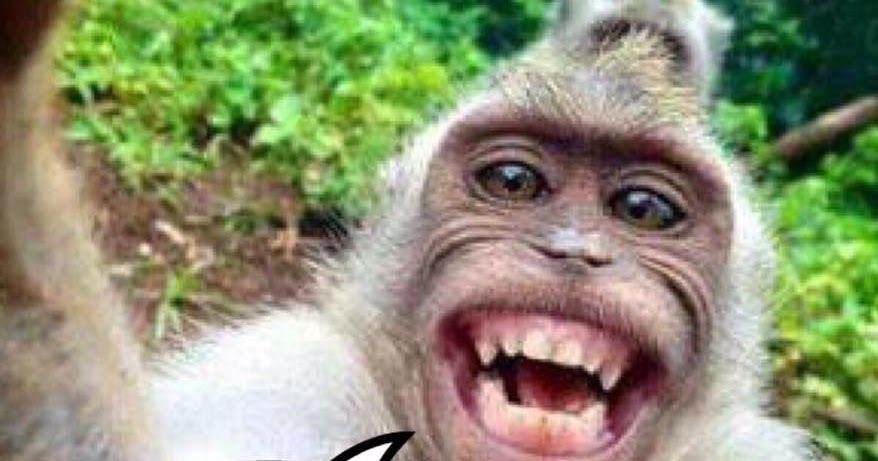 Terbaru 22 Download Gambar Lucu Bali Kumpulan Gambar Lucu Bahasa Bali Gambar Gokil Kumpulan Gambar Lucu Bikin Ngakak Abis Terbaru Le Di 2020 Gambar Lucu Gambar Lucu