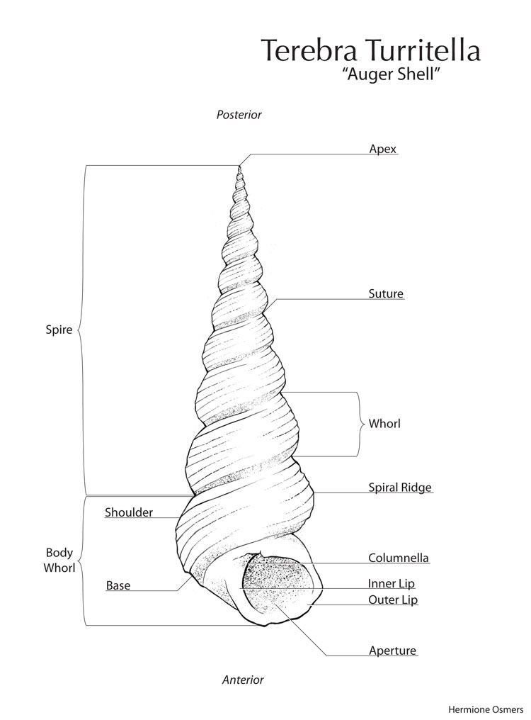 Gastropod Diagram Basic - Complete Wiring Diagrams •